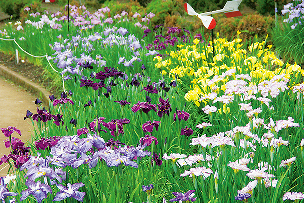 花の王国ふくしま岳温泉観光協会