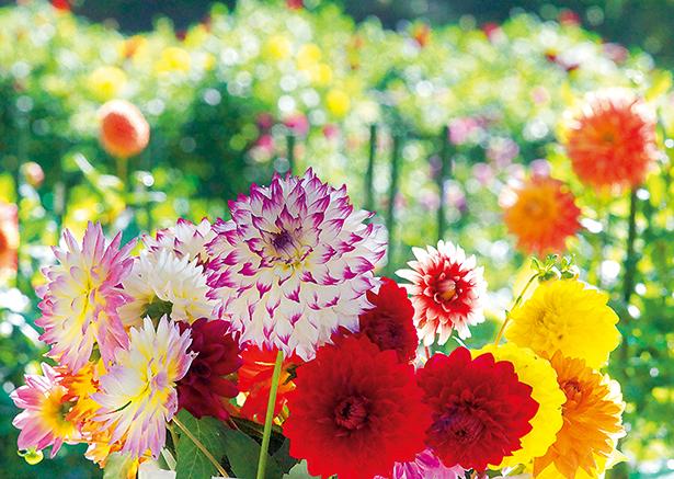 花の王国ふくしま伊達市観光物産交流協会