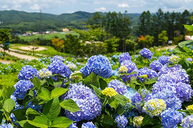 花の王国ふくしま観月台文化センター
