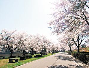 花の王国ふくしま観音寺川の桜並木