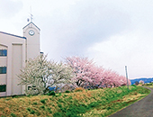 会津エリア大林ふるさとの山