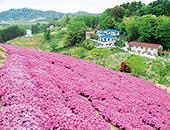 県北エリア岳温泉桜坂