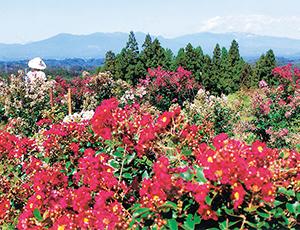 花の王国ふくしまさつき山公園