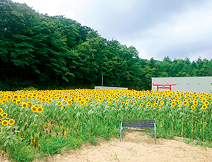 花の王国ふくしま中禅寺湖畔のオオヤマザクラ