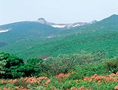 県北エリア羽山の里クマガイソウ園
