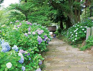 花の王国ふくしま雨引山楽法寺(雨引観音)