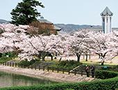 県北エリア旧伊達郡役所の桜