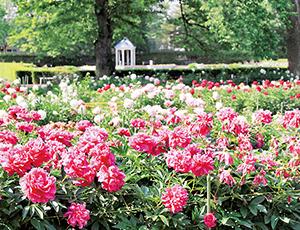 花の王国ふくしまカルチャーパーク ドリームランド