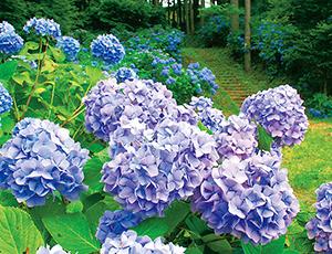 花の王国ふくしまふるどの桜街道