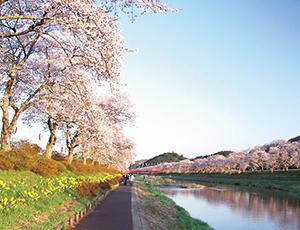 花の王国ふくしま夏井千本桜