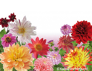 花の王国ふくしま向ヶ岡公園(県指定天然記念物の枝垂れ桜)