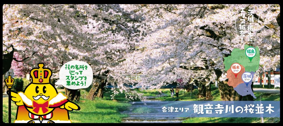 会津観音寺川の桜並木