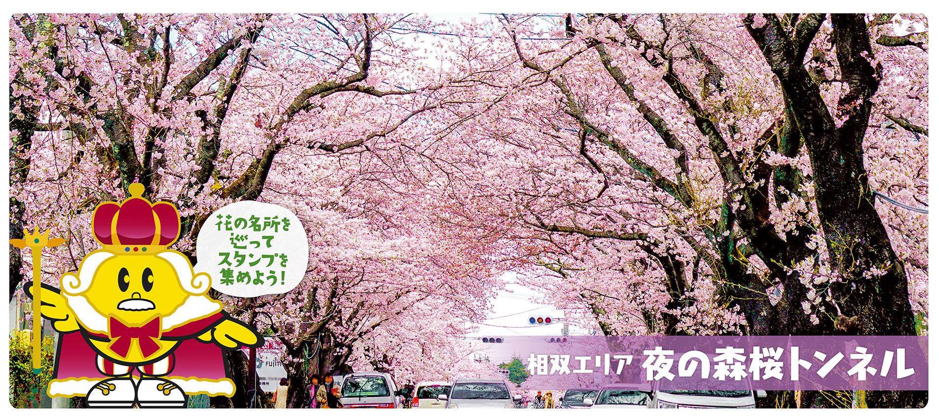 夜の森桜トンネル