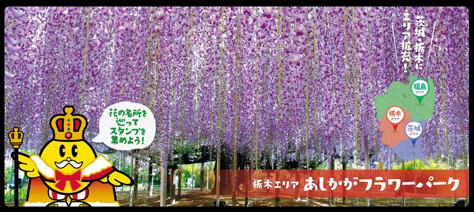 栃木県あしかがフラワーパーク